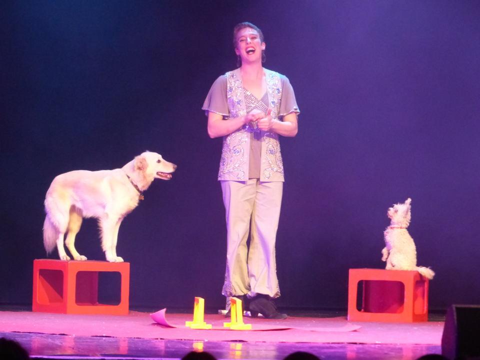 spectacle dressage des chiens et animaux domestiques